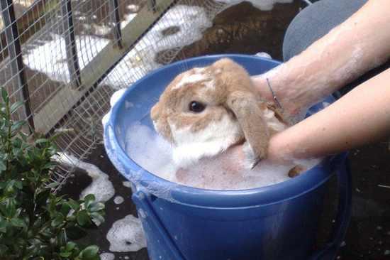 תמונות מתוקות של ארנבים