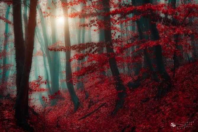 תמונות שיעשו לכם חשק לצאת לטבע!