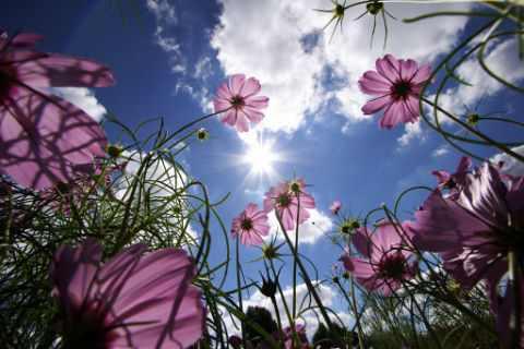 תמונות מדהימות של האביב