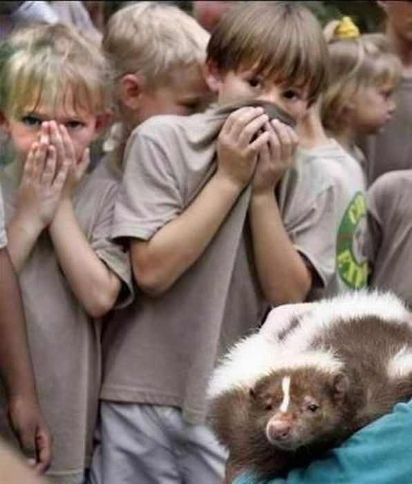 תמונות מצחיקות של חיות