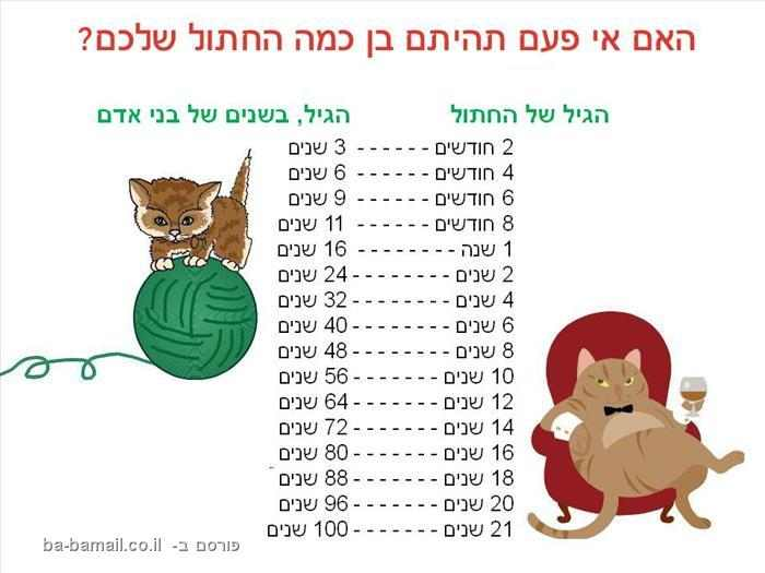 בן כמה החתול שלכם?