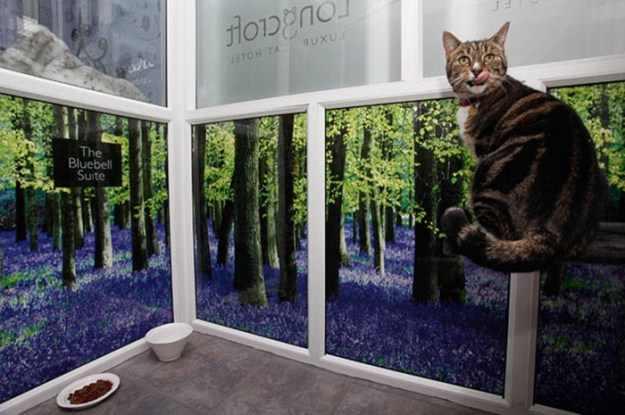 בית מלון יוקרתי לחתולים
