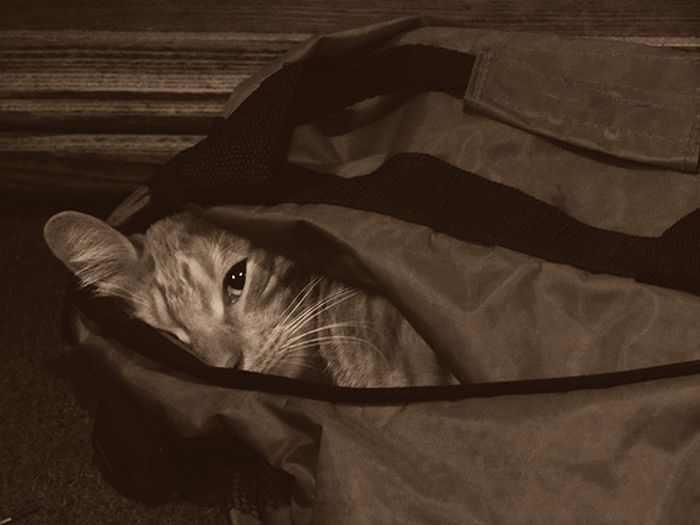 חתולים מתחבאים במקומות משונים