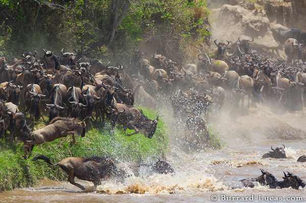 חיי בר באפריקה