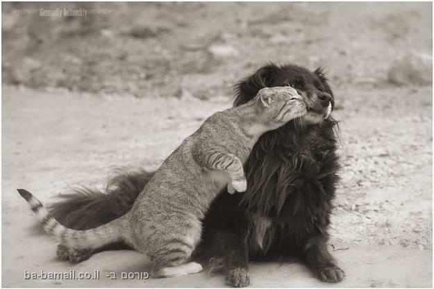 כלבים וחתולים