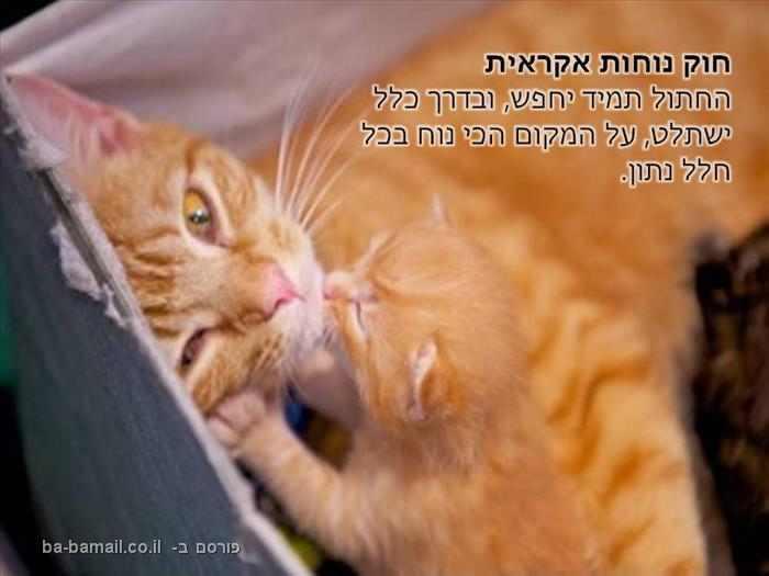 חוקים של חתולים