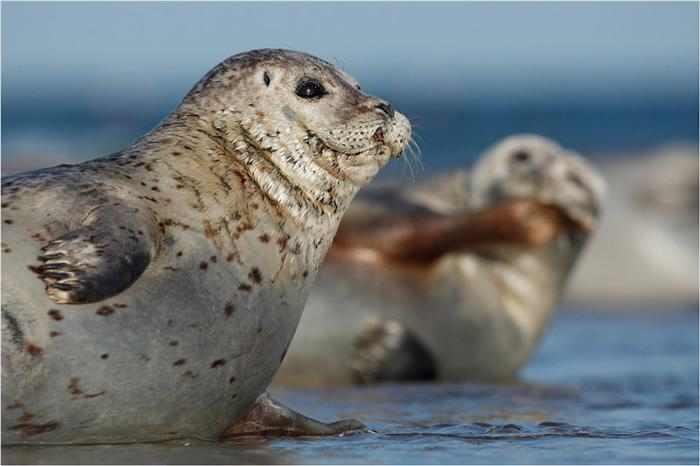 תמונות עוצרות נשיהמ של חיות בר
