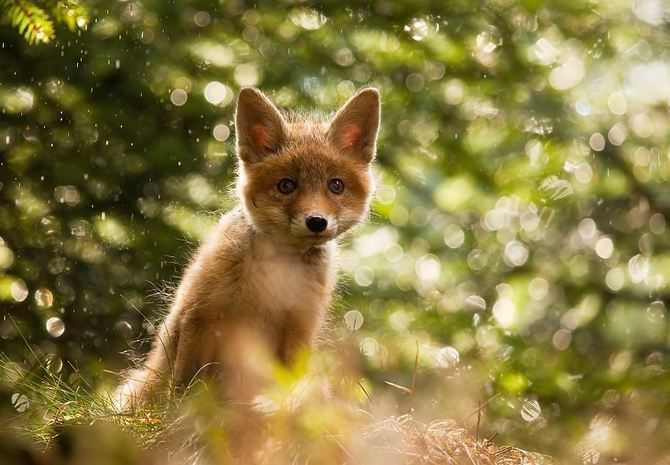תמונות נפלאות של חיות