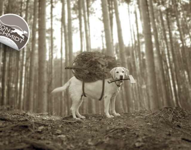 תמונות מצחיקות של כלבים