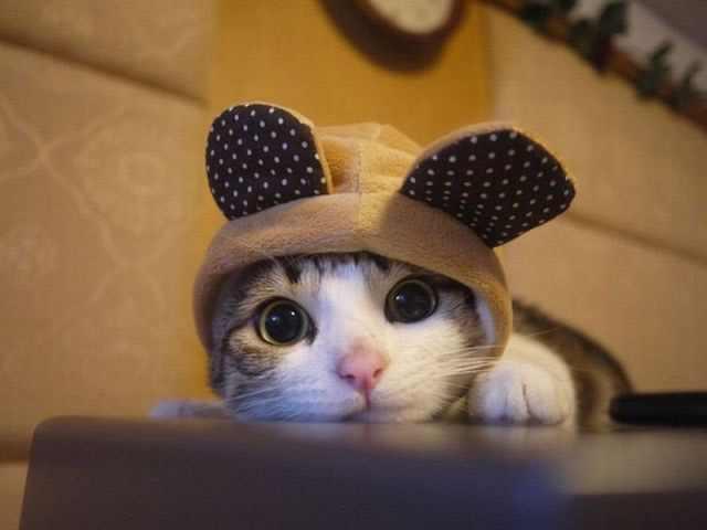 תמונות מצחיקות של חתולים