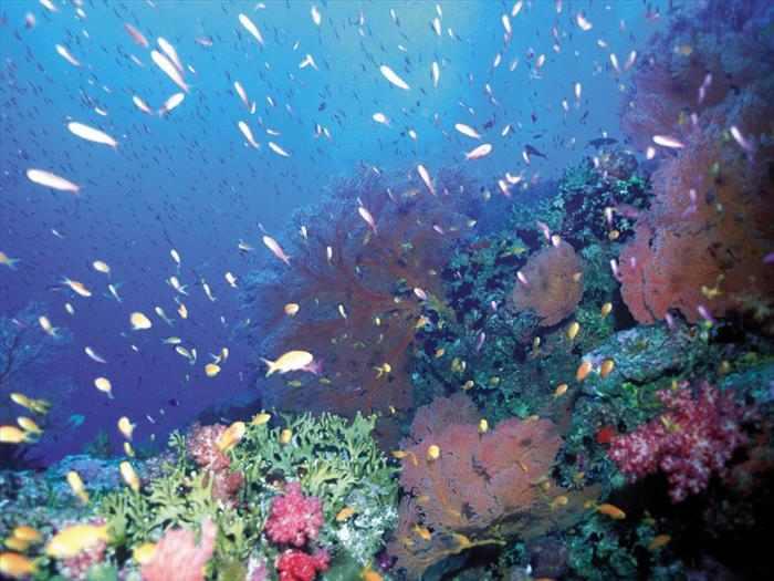 תמונות מדהימות מהאוקיינוס