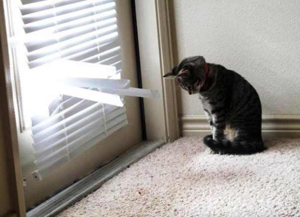 כלבים וחתולים שנתפסו על חם!