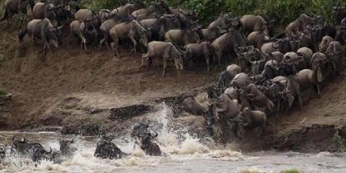 ההגיהה הגדולה באפריקה