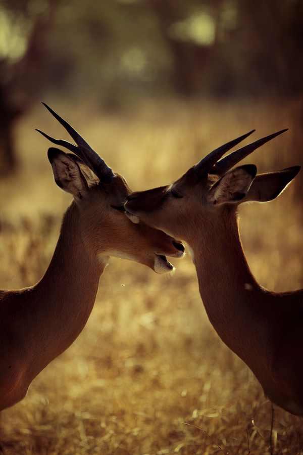 תמונות מדהימות מקניה