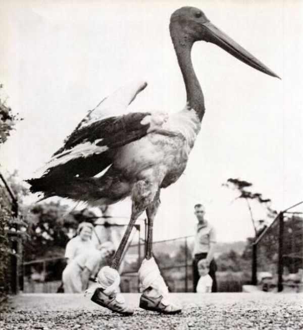 תמונות וינטג של חיות