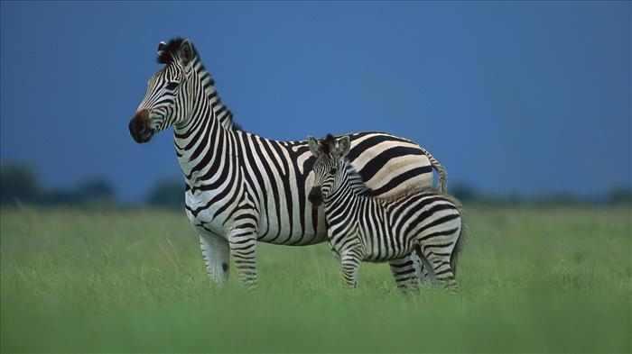 מסך מלא - תמונות של בעלי חיים באיכות HD!