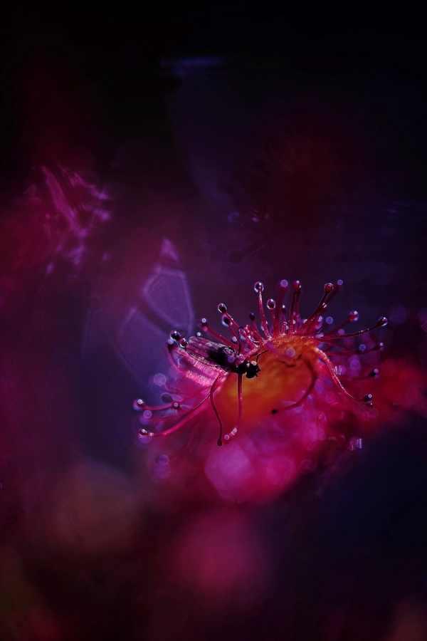 תמונות מיקרו של חרקים