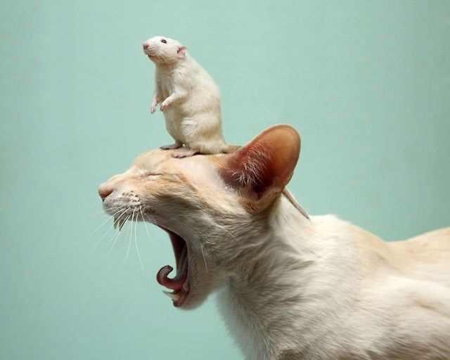 תמונות מציקות של חיות