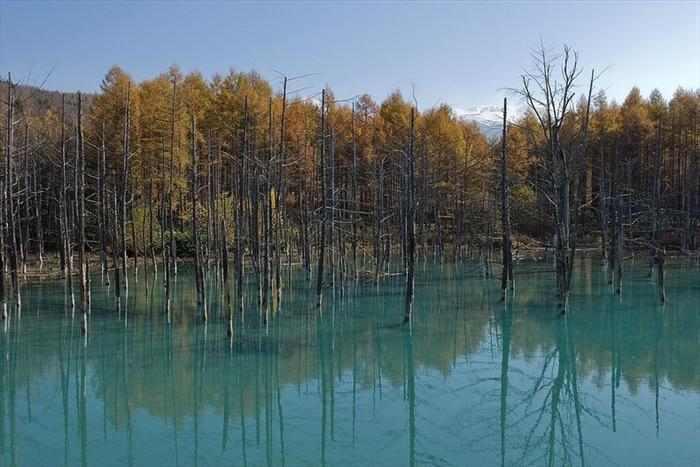 האגם הכחול ביפן - תופעה מדהימה!