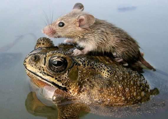 תמונות של חיות חברות