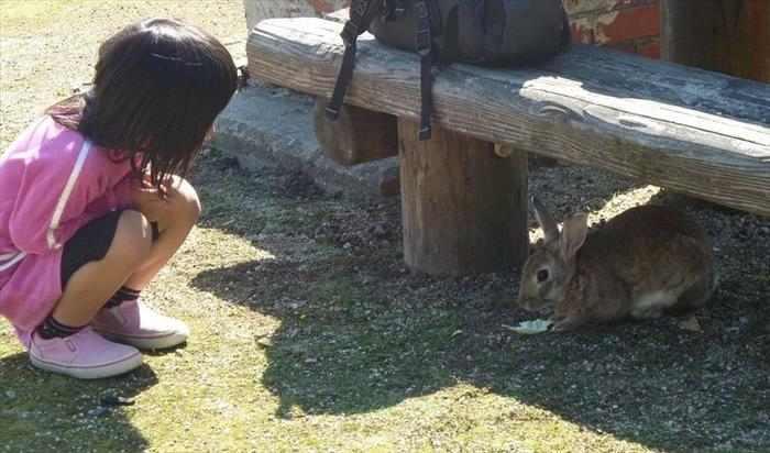 אי של ארנבים