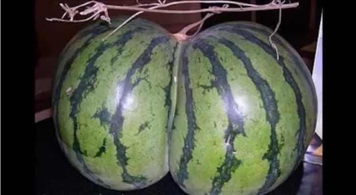 ירקות שובבים