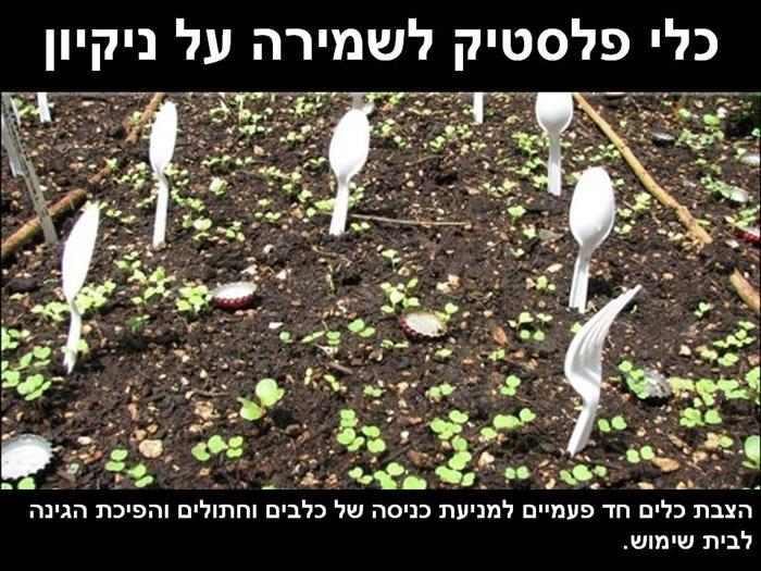לגזור ולשמור: טיפים מקוריים ופשוטים לגינה