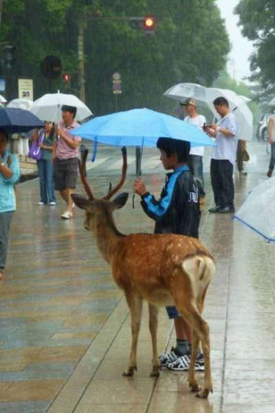 חיות ואנשים ברגעים מרגשים