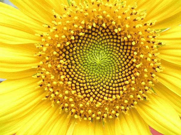 סימטריה מושלמת בטבע
