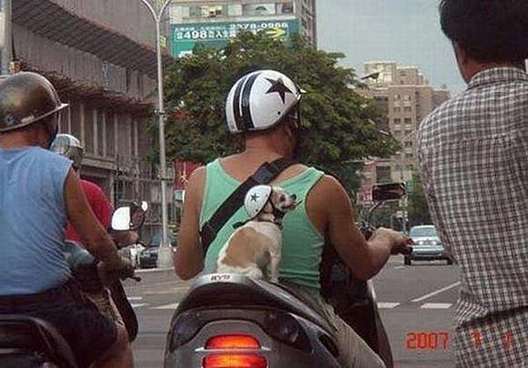 חיות מתנהגות כמו בני אדם