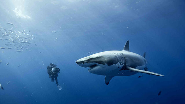 תמונות מדהימות של אומץ