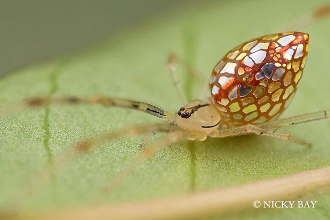 עכבישים מיוחדים