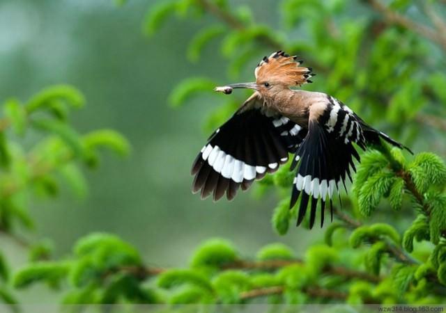 תמונות מדהימות של חיות טרף