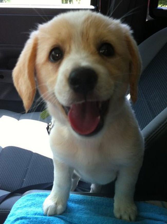 החיות השמחות ביותר בעולם