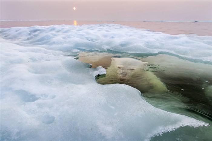 התמונות הזוכות בתחרות הצילום של נשיונל ג`יאוגרפיק
