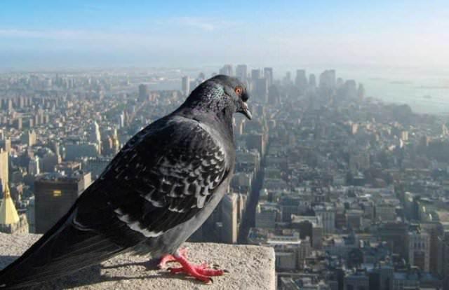 העולם ממעוף הציפור