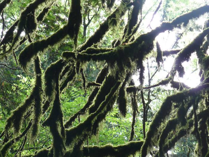 יערות קסומים