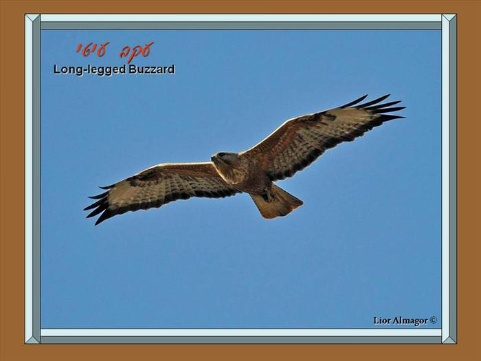 ציפורי ארצנו - אוסף מדהים ממלכת החי של ישראל
