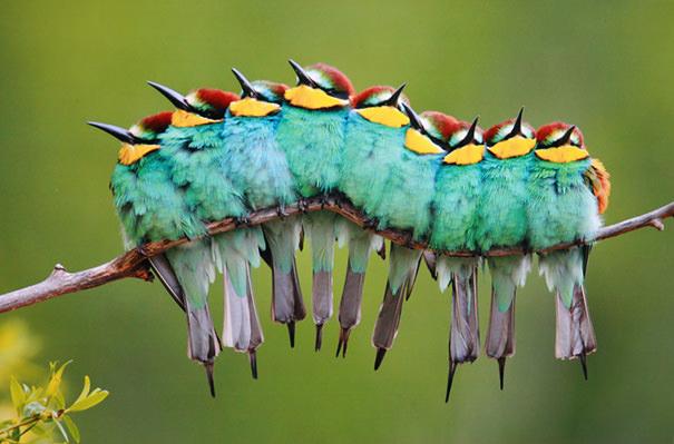 תמונות מדהימות של בעלי חיים בפעולה