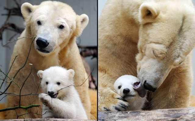 להיות אמא בממלכת החיות