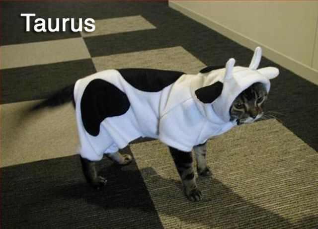 חתולים משחזרים את גלגל המזלות בתמונות