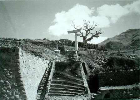עצים ניצולים מהירושימה