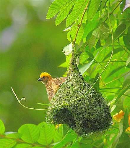 קן של ציפורים