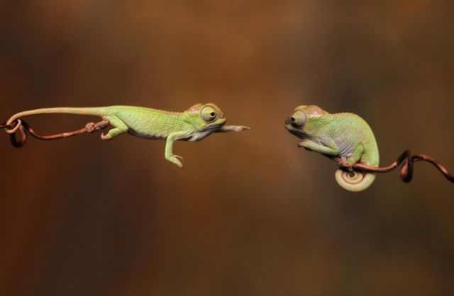 תמונות של בעלי חיים בתזמון מושלם