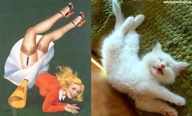 חתולים ונערות שעשועים - מצחיק!