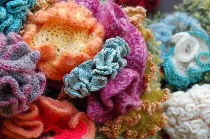 שונית אלמוגים מצמר