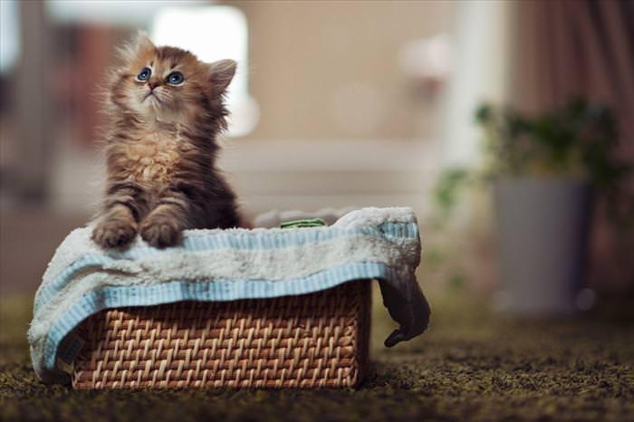 האם זה החתול הכי פוטוגני בעולם?