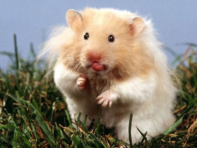 תמונות חמודות של חיות
