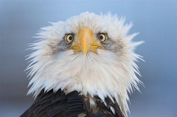תמונות של חיות מופתעות