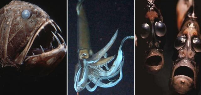 עובדות מדהימות על האוקיינוסים